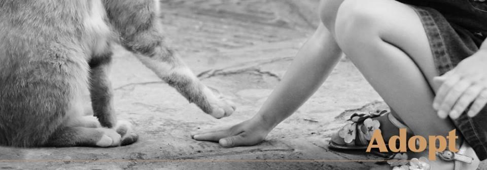 Animal Control image